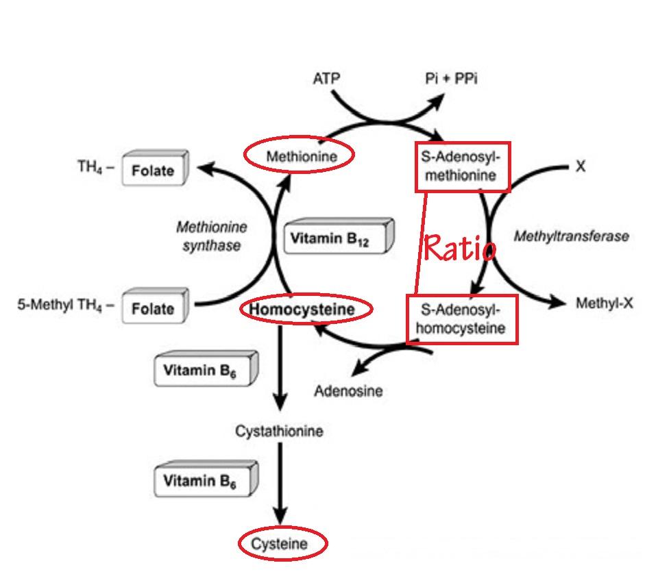 epigenetik mäta