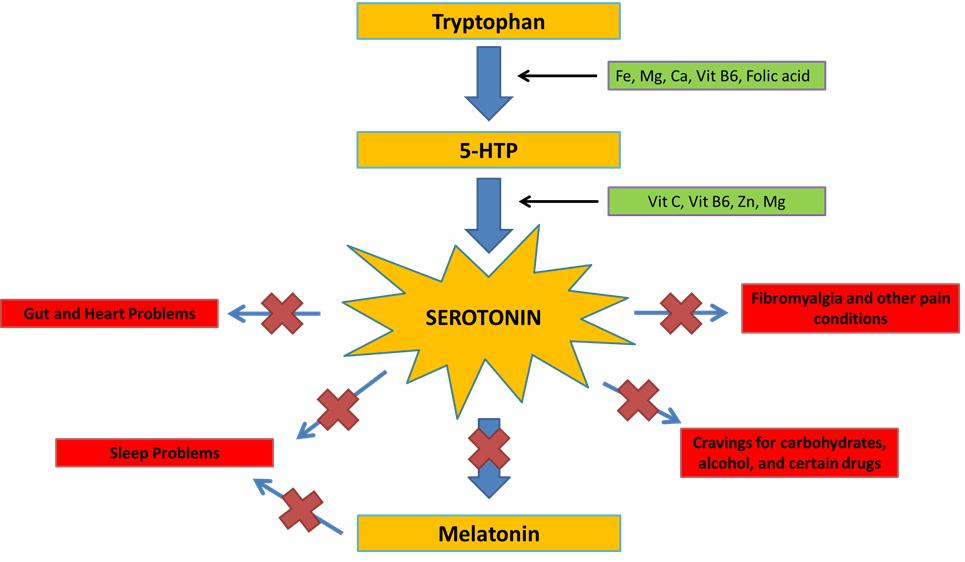 serotonin pathway